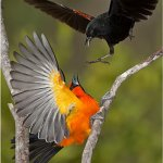 Raymond Hsu - Bird Fight - 1st - Digital Advanced Nature