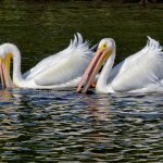 Stephen Balke - White Pelican Fishing Team - 3rd - Digital Beginner Pictorial
