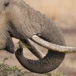 Garry Revesz - African Elephant - 2nd - Digital Beginner Nature