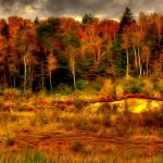 Jon Clarke - Autumn Fire - 1st - Digital Intermediate Artistic Contemporary