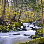 Paul McLeod - Flowing Brook - 1st - Print Level 1 Pictorial