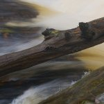 Bruce Peters - Flood Stage On The Sequin River - 3rd - Digital Intermediate Nature