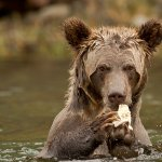 Garry Revesz - Grizzly_Cub - 1st - Digital Beginner Nature