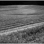 Claude Barras / Field at Rest / HM / Print Level 2 Pictorial B&W Theme