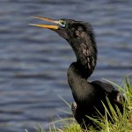 Stephen Balke - Anhinga Fish Spotter - 2nd - Digital Beginner Pictorial