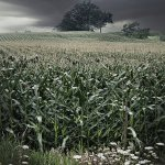Warren Davis / Storm Over Cornfields / HM / Digital Intermediate Pictorial