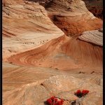 Jerry Soltys / Indian Paintbrush In Utah Desert / 1st / Digital Advanced Nature