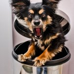 Trish Aleve - Buster The Grouch - 3rd - Beginner Pictorial